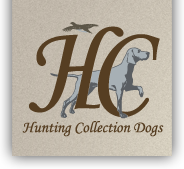 Hunting Collection Dogs